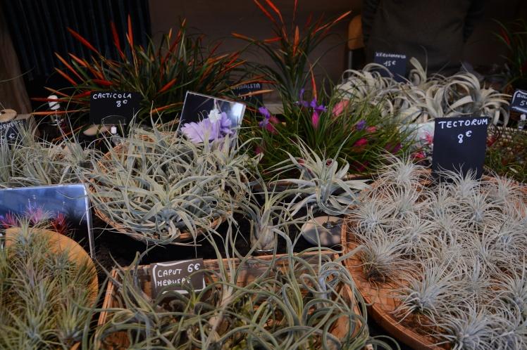plantes-sans-terre-6